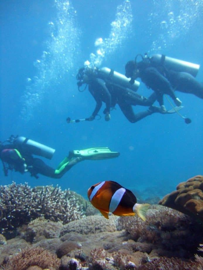 diver, clown fish, diving